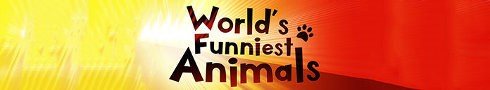 Poster for Worlds Funniest Animals