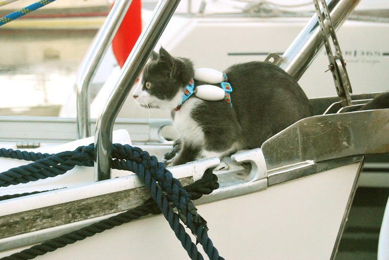 Capitaine-Gribouille-bateau-voisin