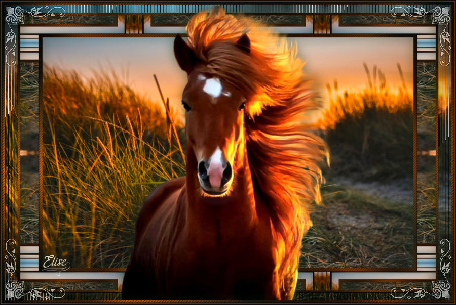 Horse - Page 2 201001094457567674