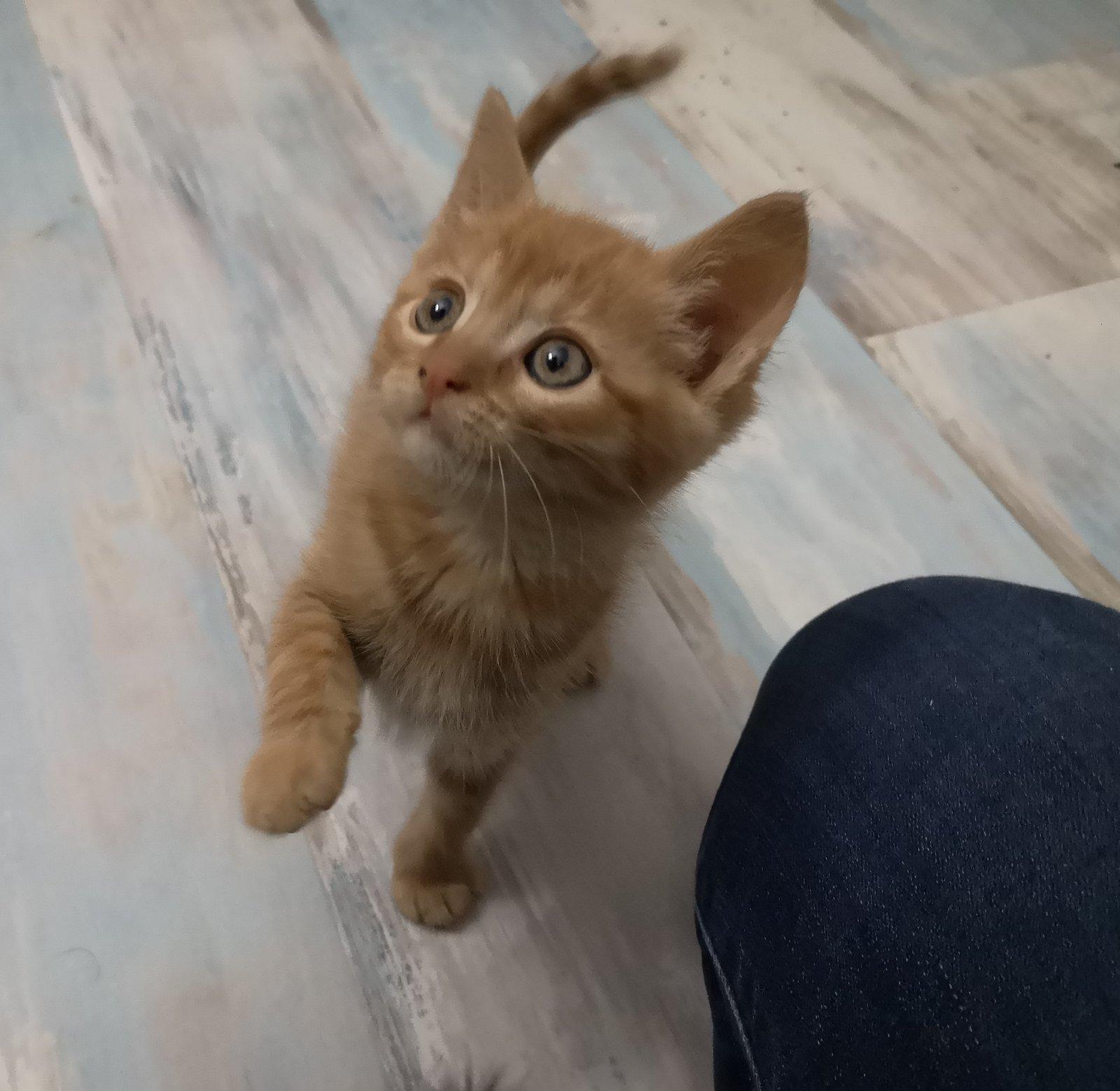 GINNY (Ginger) 201103010846937613