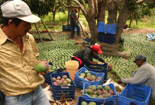 Coopérative agricole arkohane
