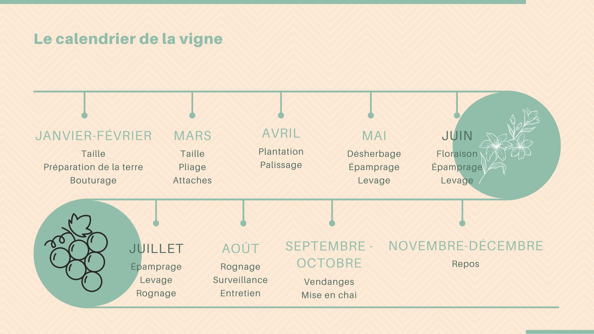 calendrier vigne