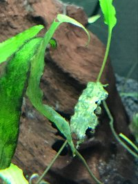 Présentation Aquarium et demande de conseils!  Mini_201203055728347670