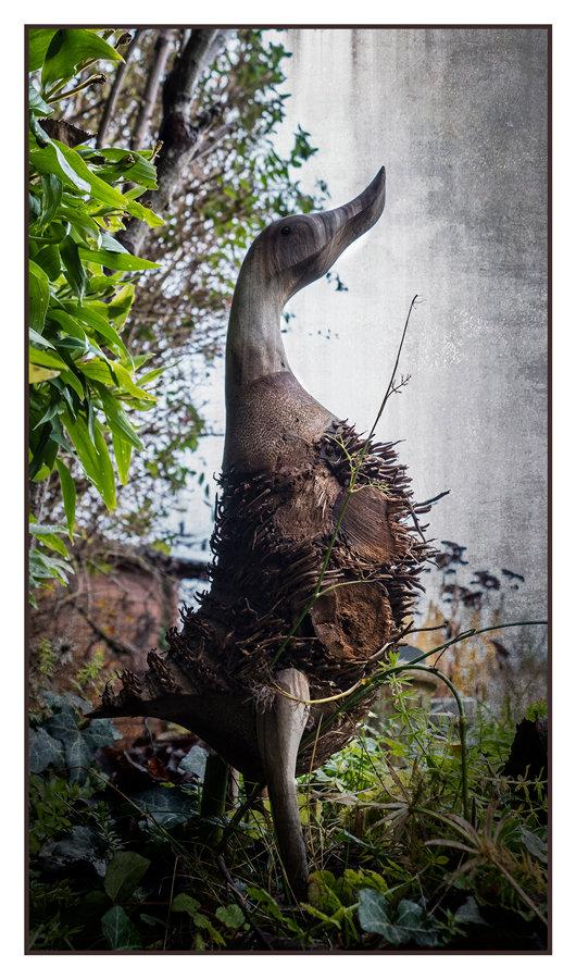 Un canard dans mon jardin 20121205163422843