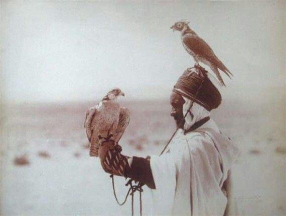 Chasses de l'Algérie: La Chasse Au Faucon   dans Coutumes & Traditions 20121308033585147
