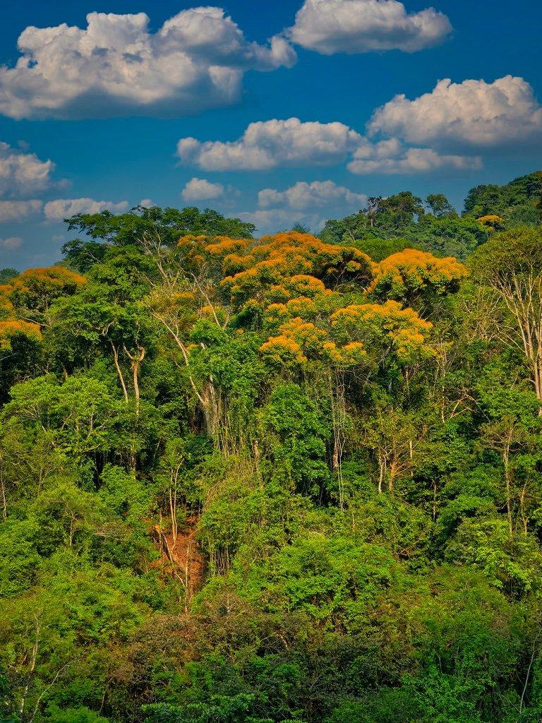Les arbres jaunes d'un coin de jungle... 201214114444299294