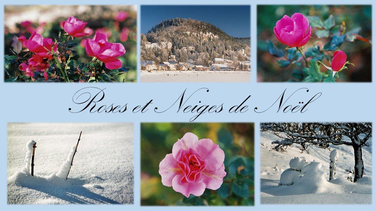 Neige et Rose