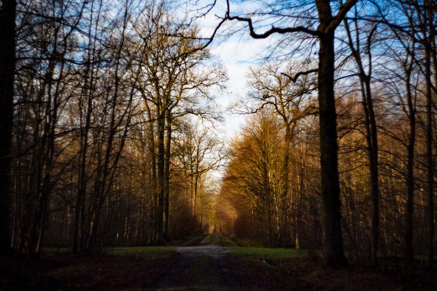 Promenade en forêt 210102053738609942