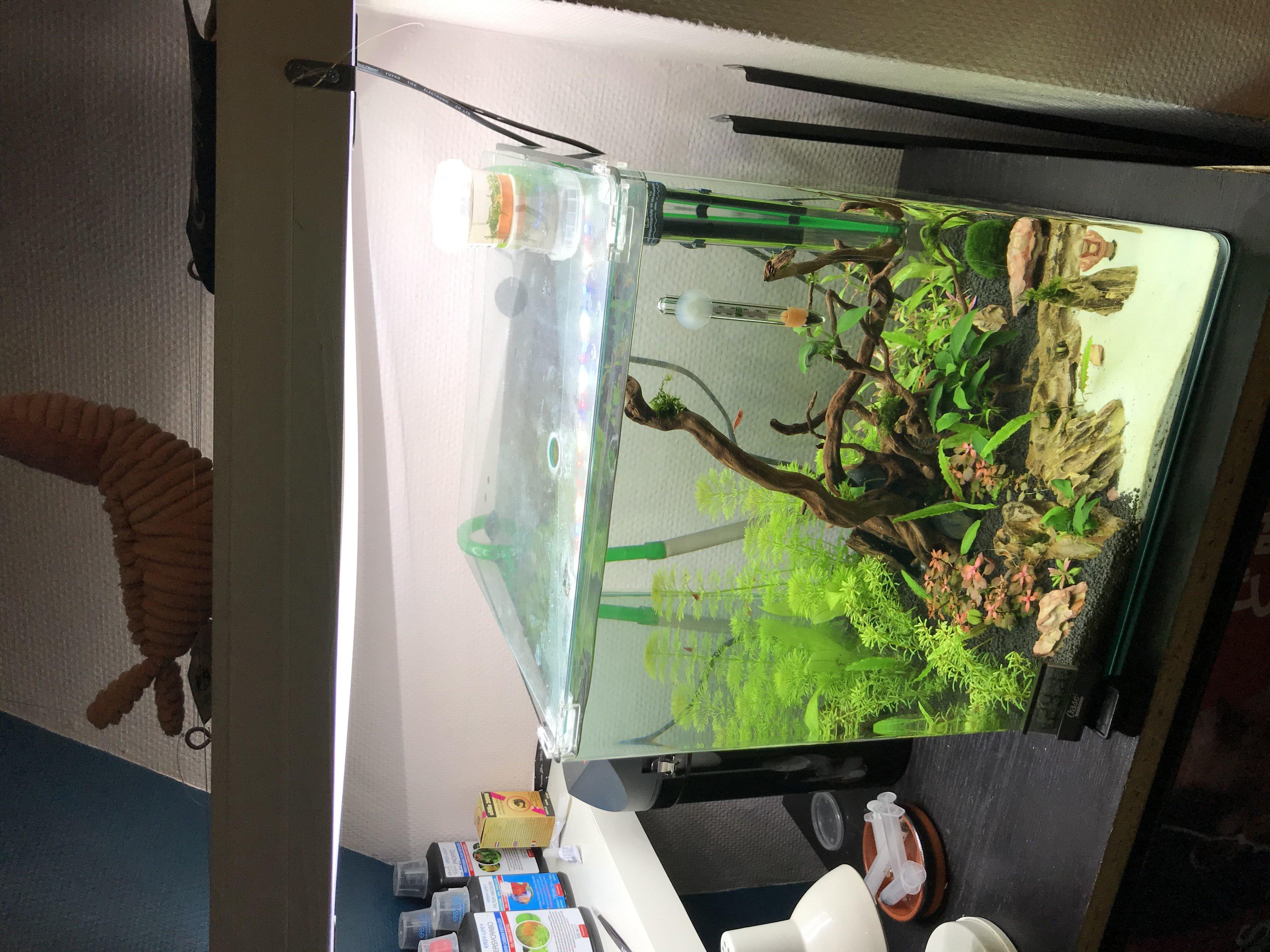 Présentation Aquarium et demande de conseils!  210104040413975025