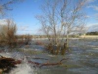 crue du Rhône a Caderousse du 07.02 Mini_210207051126952455