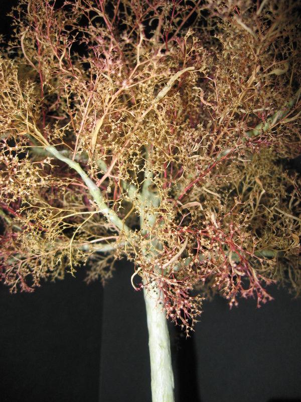fabriquer des arbres pour dioramas au 1/35 au 1/48 ou au 1/72 (fin du montage) - Page 2 210219011057569680