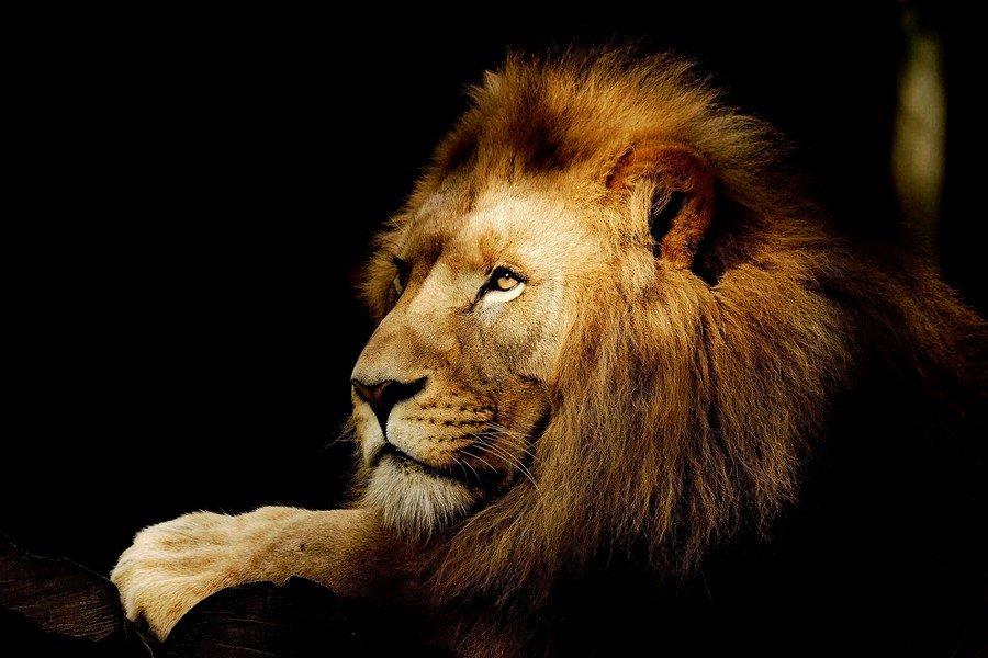 le roi et moi 210310082512883599