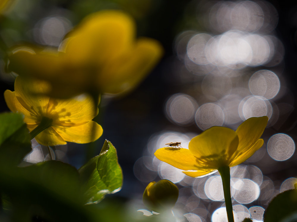 """Concours photos avril 2021 """"C'est le printemps"""" - Page 3 210412063700539153"""