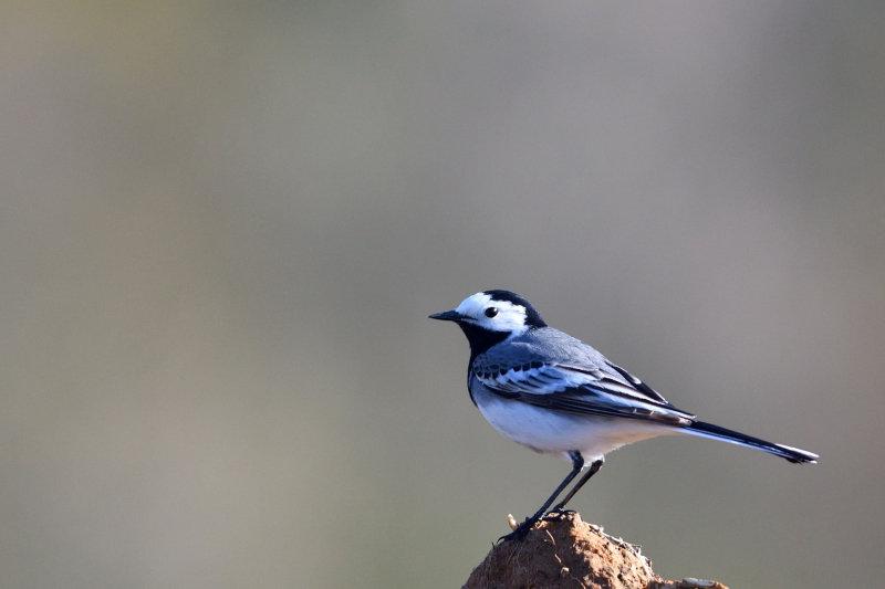 210413_055_oiseaux_1080