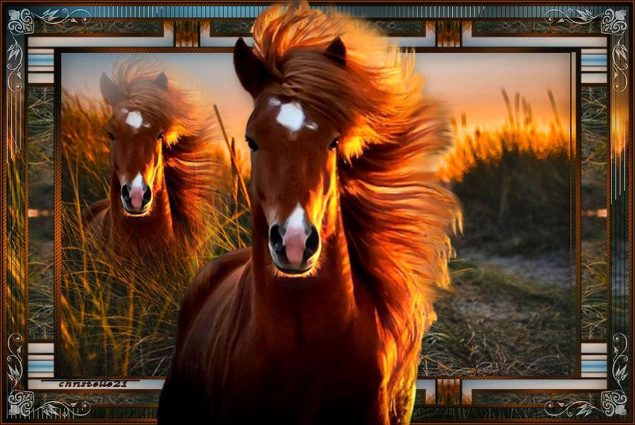 Horse 210414062328645628