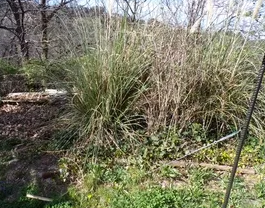 Des nouvelles de mon jardin