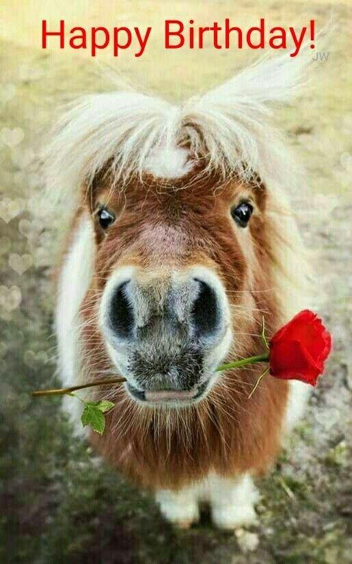 Happy-Birthday-Wiches-Anniversaire-cheval