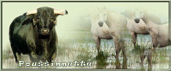 Bann chevaux