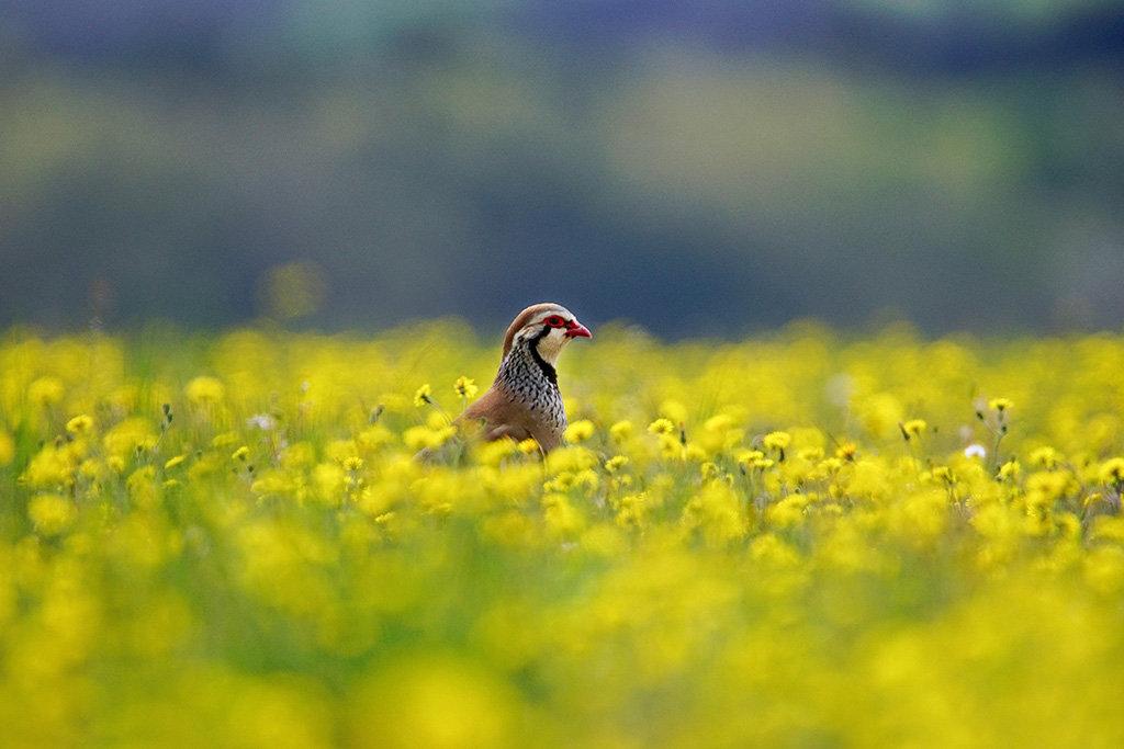 les oiseaux de Camaroney ( mise a jour du 13.06.2021) - Page 22 210613053916803422