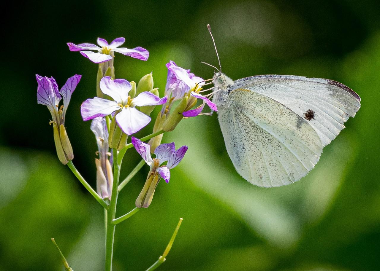 Macros/  proxi/  insectes  - Page 30 210714110703284929