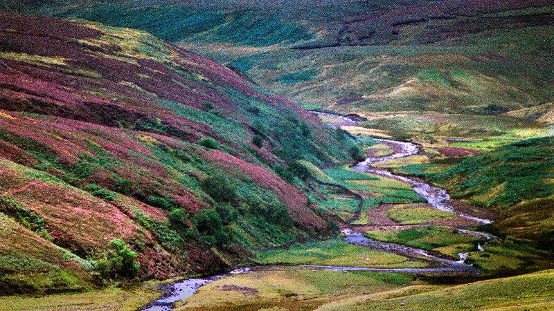 Bruyères dans le North-Yorkshire 21080202510569556