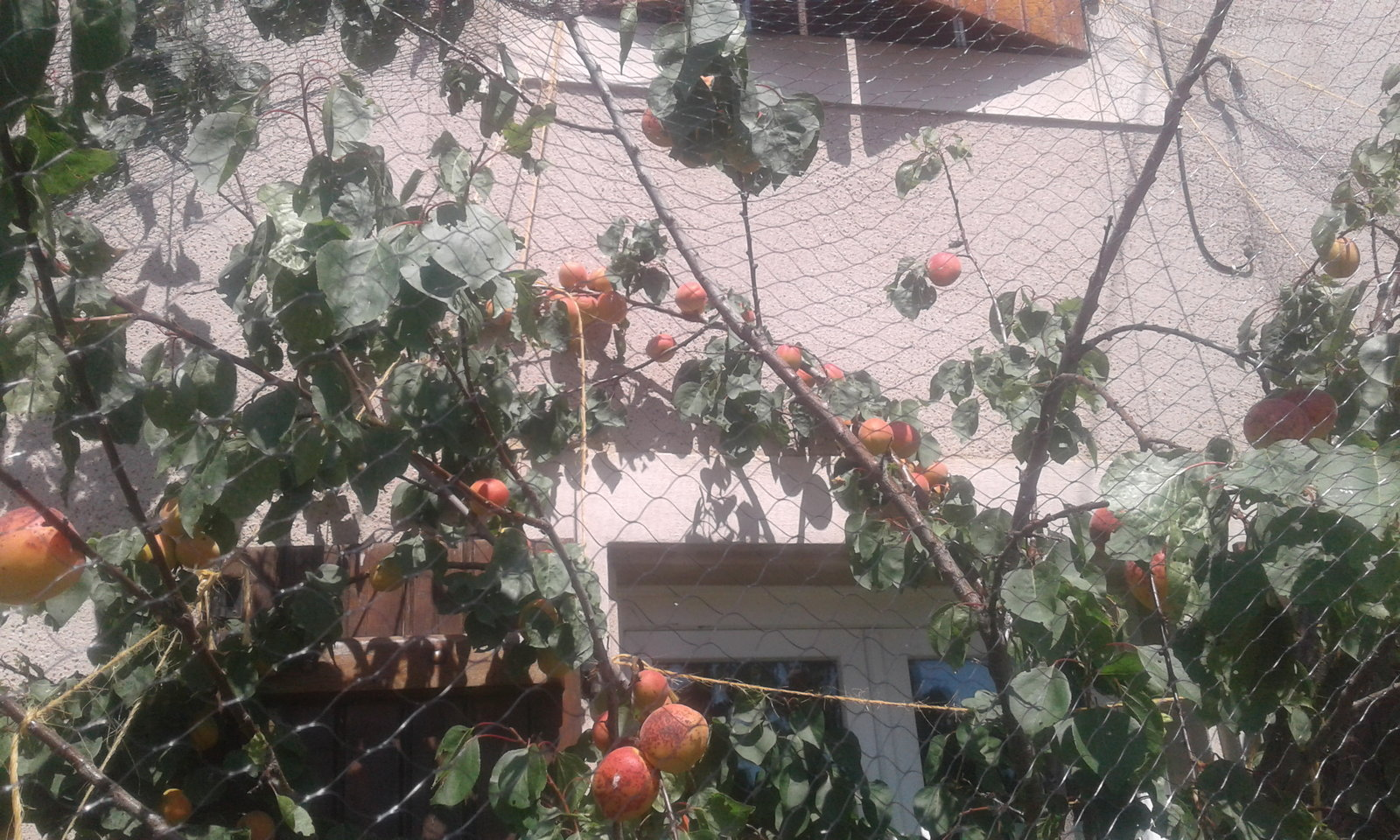 recolte fruits 2021 21080409533721438